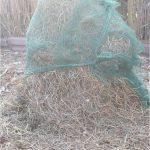 Feigenbaum starker Winterschutz