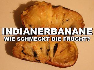 Früchte der Indianerbanane