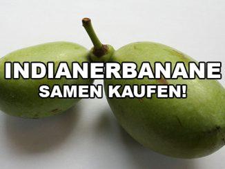 Samen der Indianerbanane kaufen