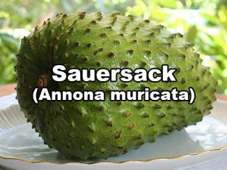 Sauersack Annona muricata