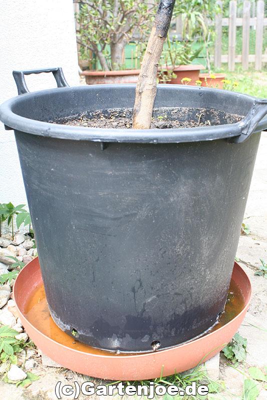 ameisen topfpflanzen vertreiben