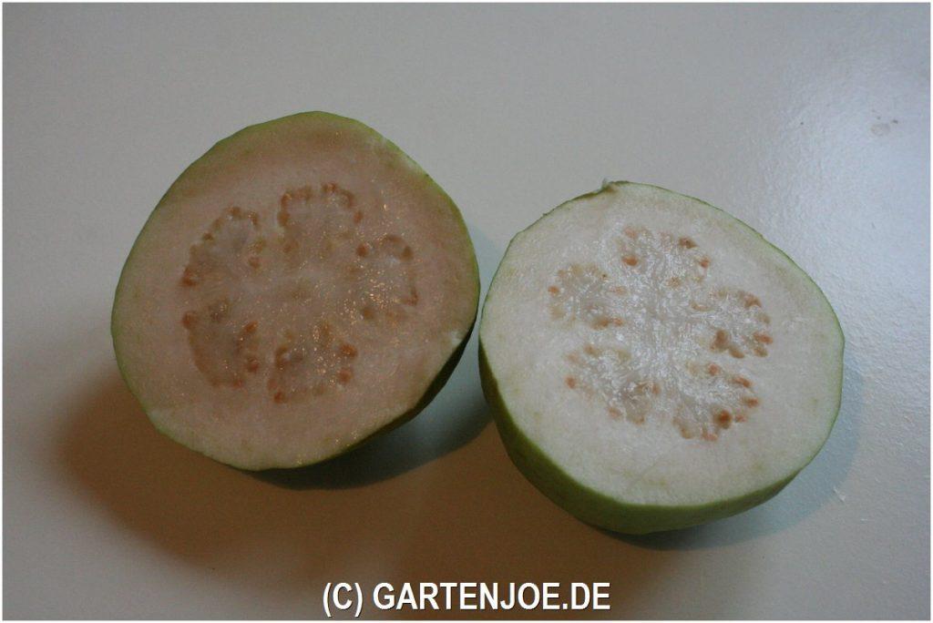 echte guave frucht