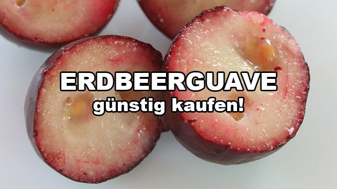 erdbeerguave kaufen