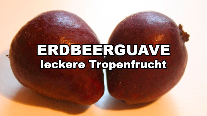 erdbeerguave psidium littorale tropenfrucht