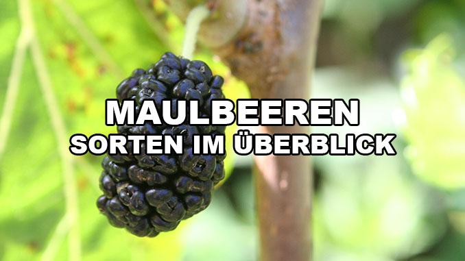 Maulbeer Sorten